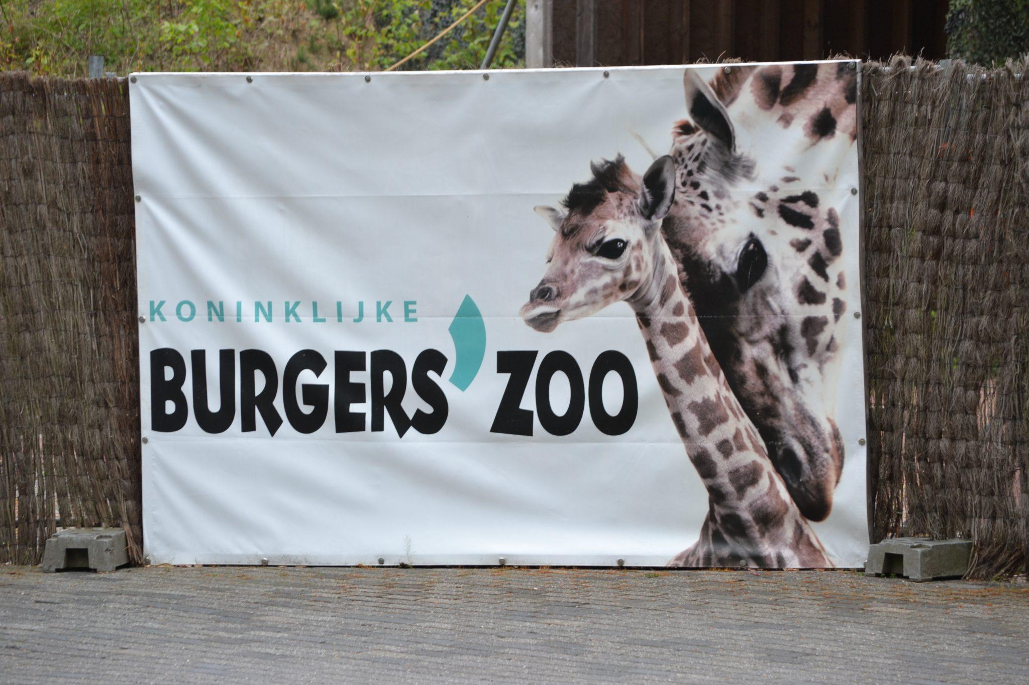 Alte neue Erinnerungen: Burgers Zoo in Arnheim - DSC 0038