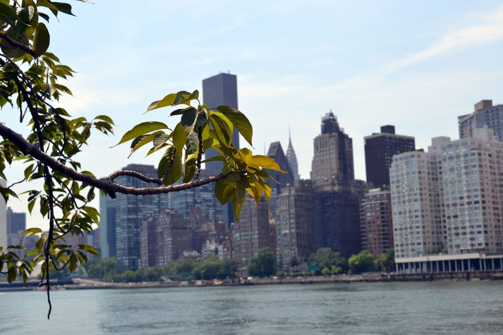 Travel Tip: Roosevelt Island & Tram // New York City - Roosevelt Island 2 1024x683