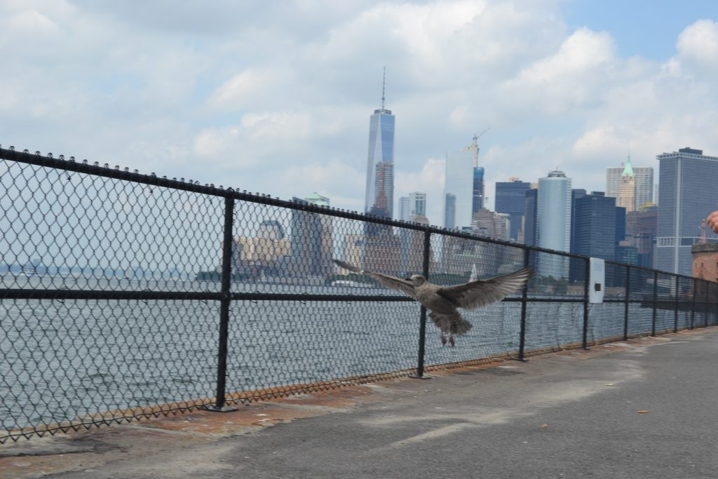 Travel Tip: Govenors Island // New York City - DSC 0705 1024x683