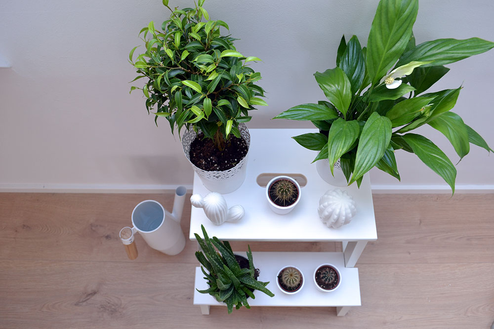 My Little Green Corner | Interior Inspiration - Little Green Corner 5